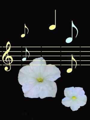 Canta El Barítono