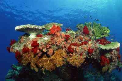 Cómo Hacer un Arrecife de Coral en el Bioma en una Caja de zapatos