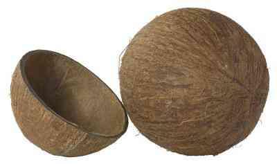 Cómo Hacer Tazas de concha De Coco
