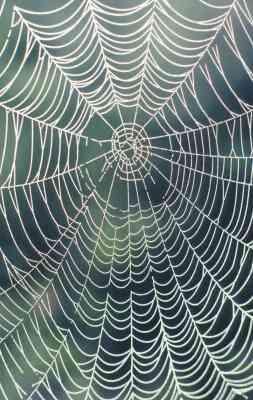Cómo Hacer un Hilo de tela de Araña