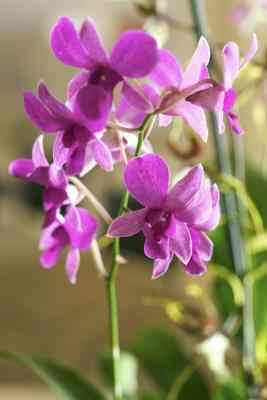 Cómo Hacer de las Orquídeas De las Medias de Nylon