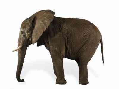 Cómo Hacer un Limpiador de pipas del Elefante