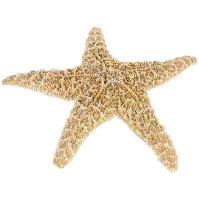 Cómo Lejía Estrella de mar