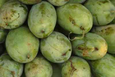 Mango De Artesanía