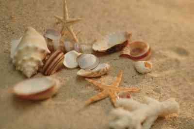 Ideas de manualidades para el Uso de Conchas de mar