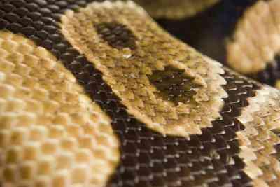 Cómo Hacer que la piel de Serpiente Tela