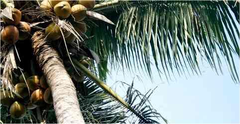 Tradicional comida Mexicana de Quintana Roo
