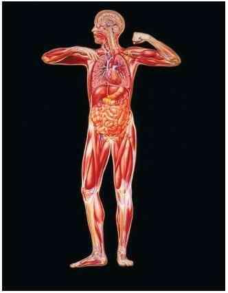 Arteria Celíaca Y Los Síntomas De La Estenosis