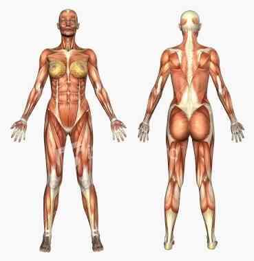 Cómo Relajar el Músculo del Esfínter