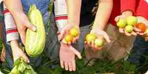 Incorporar la jardinería en el jardín de infantes y primer grado programa de estudios