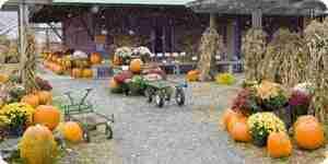 Configurar al aire libre decoraciones de halloween