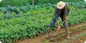 Diseñar, planificar y plantar un jardín de vegetales