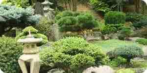 Crecer un jardín de musgo: ideas de jardinería