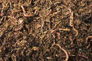 Hacer una composta: pilas de compost casero