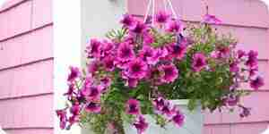Hacer cestos con flores colgantes