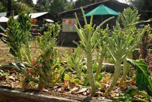 el Venado Dañado Jardín