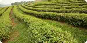 La prevención y control de la erosión del suelo: el suelo de conservación