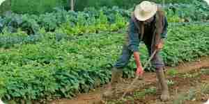 Hacer de vegetales orgánicos de la planta de alimentos