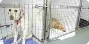 Escoger el derecho de alojamiento de mascotas de la perrera: resort, perreras o hoteles