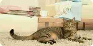 La construcción de gato condominios y casas: muebles de planes de