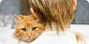 Felino herpes: causas, síntomas, tratamiento y prevención