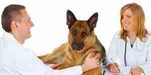 Elegir un veterinario