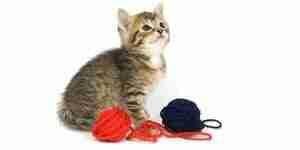 Hacer juguetes caseros para gatos: los mejores juguetes para gato