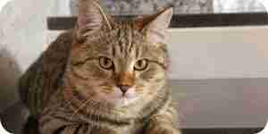 Dejar de gato pulverización de problemas: la información acerca de los gatos