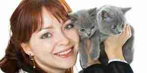 Gatito de información y capacitación para el bebé gatitos y gatos domésticos