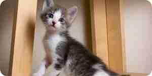Hacer árbol de gato muebles: torres, arañar puestos y camas para gatos