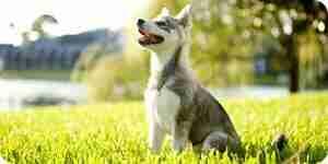 Comprar perro ejercicio plumas