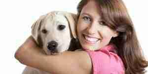 Cuidado de perros de raza labrador retriever y cachorros