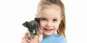 Cuidado para la rata terrier: rat terrier perros