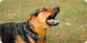 Dejar que un perro ladre: dejar de ladrar los perros