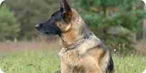 Stop agresivo comportamiento de los perros: perro consejos de entrenamiento