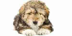 El tratamiento de caninos cálculos en la vejiga