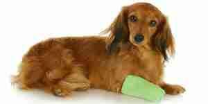 El tratamiento de melanoma canino