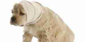 El tratamiento de perro convulsiones: perro de atención e información