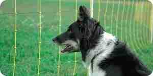Instalar un invisible cerca eléctrica para perros