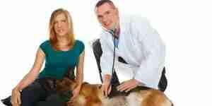 Los signos y síntomas de la diabetes perros
