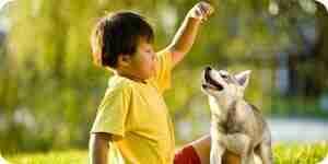 La socialización de un cachorro: comportamiento de los perros consejos de entrenamiento