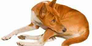 El tratamiento de la artritis canina: perros de la salud preguntas y problemas