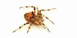 Mata a las arañas: las arañas de control de plagas