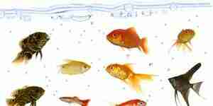 Comprar peces de agua dulce