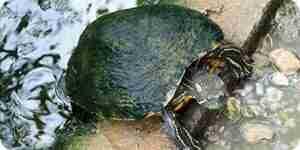 Hacer que la tortuga de alimentos