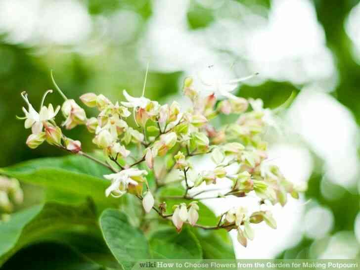 Imagen titulada de Elegir las Flores del Jardín para Hacer Popurrí Paso 3Bullet3