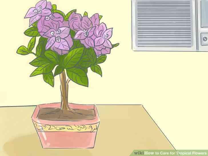 Imagen titulada de Atención para las Flores Tropicales Paso 6
