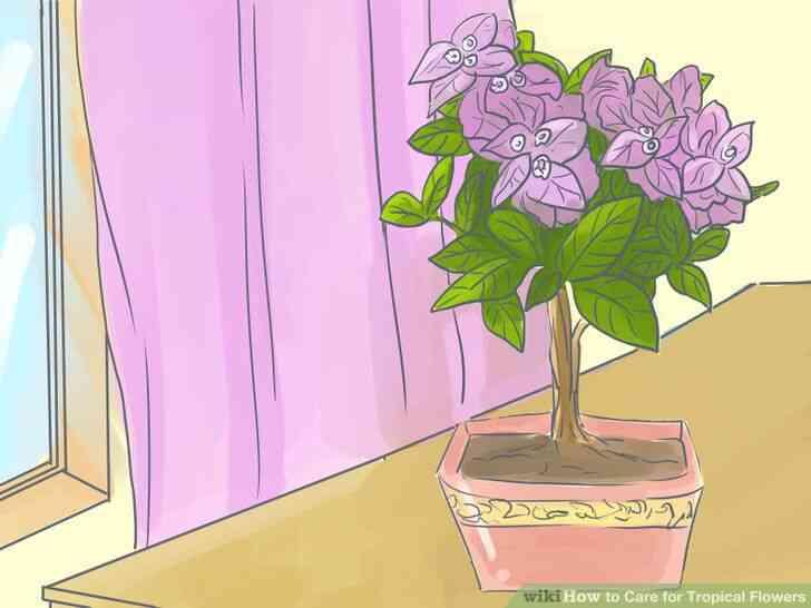 Imagen titulada de Atención para las Flores Tropicales Paso 7