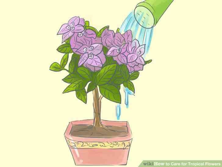 Imagen titulada de Atención para las Flores Tropicales Paso 8
