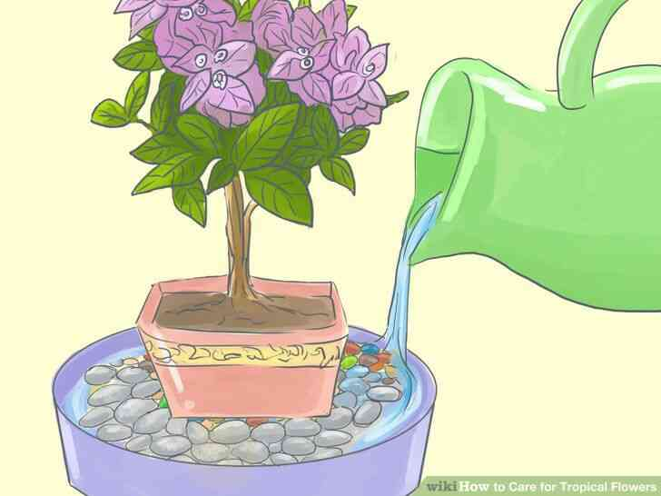 Imagen titulada de Atención para las Flores Tropicales Paso 9